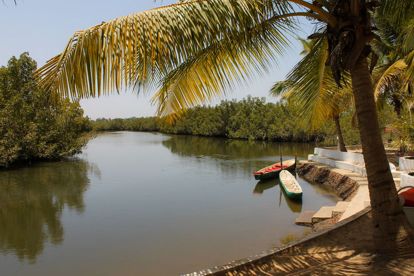 Tree Reflection Water Lake Adult Nature Outdoors Adults Only Day Beauty In Nature Boats⛵️ Kayaking In Nature Scenics Makasutu Gambia, Africa Sky Connected By Travel Palm Tree Wildlife