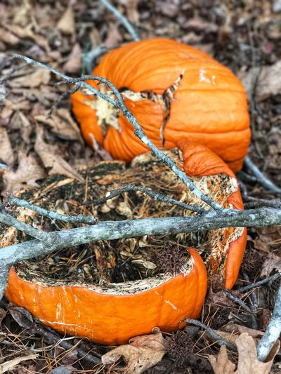 Rotten pumpkin in the woods Orange Color Cut Open Wooded Area Woods Rotted Away Rotten Smell Orange Pumpkin Gone Bad Spoiled Rotten Pumpkin Rotted Pumpkin Rotted Rotten Orange Color Pumpkin No People Nature Day Outdoors Close-up Beauty In Nature EyeEmNewHere