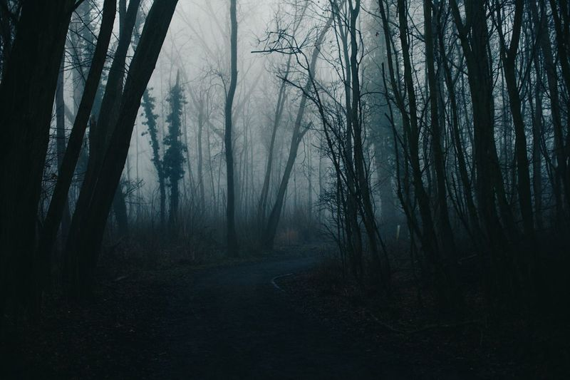 Tree Forest Nature Fog WoodLand Bare Tree Spooky Landscape No People Outdoors