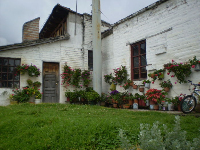 #back Yard #ecuador #otavalo #TheTourist #whitehouse Green House Potted Plant