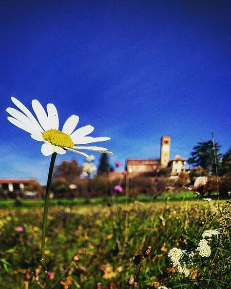 L'ultima Margherita della stagione a Viatosto Last Daisy of season on viatosto piedmont italy Igworldclub Instagood Ig_europa Ig_italia_ Vscaward Ig_captures Vscocam Liveauthentic Chasinglight Featuredmeinstagood Photowall Allshots_ Hot_shotz Phototag_it Vscogood Vscoaward Beautiful Bestpics Visualsgang Visualsoflife Ig_asti_ Lights Piemonte_super_pics Loves_united_asti Garden viatostonelcuore Daisy igflower streetphotographer