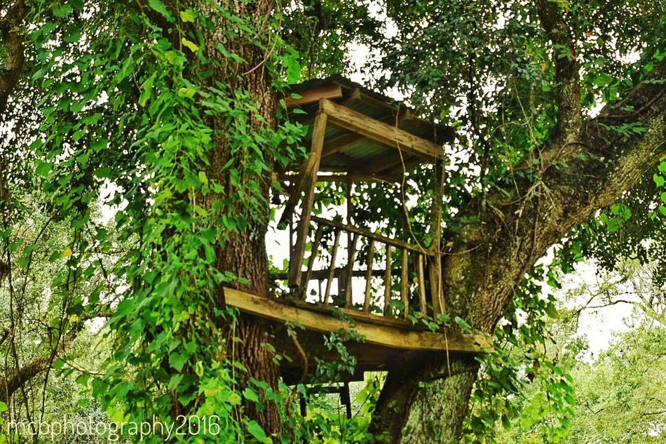 Old treehouse Seen Better Days Tree Low Angle View Built Structure South Louisiana Tree Trunk Architecture Growth Wood - Material Branch Green Color Outdoors Day Obsolete Nature Green Sky Tranquil Scene Tranquility No People Scenics