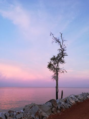 Sunrise Tepi Rumah Sky Water Sea Land Beach Sunset Tranquility Cloud - Sky Beauty In Nature Nature Tranquil Scene Scenics - Nature Tree Horizon Over Water Plant Environment Landscape Horizon Outdoors No People