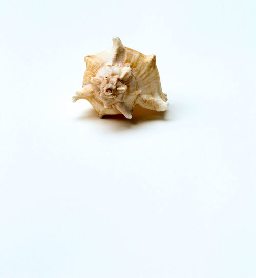 High angle view of a shell on white background
