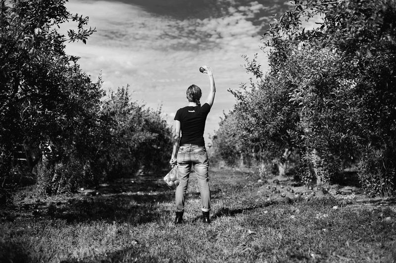 Rear View Of Woman Holding Apples While Standing At Orchard