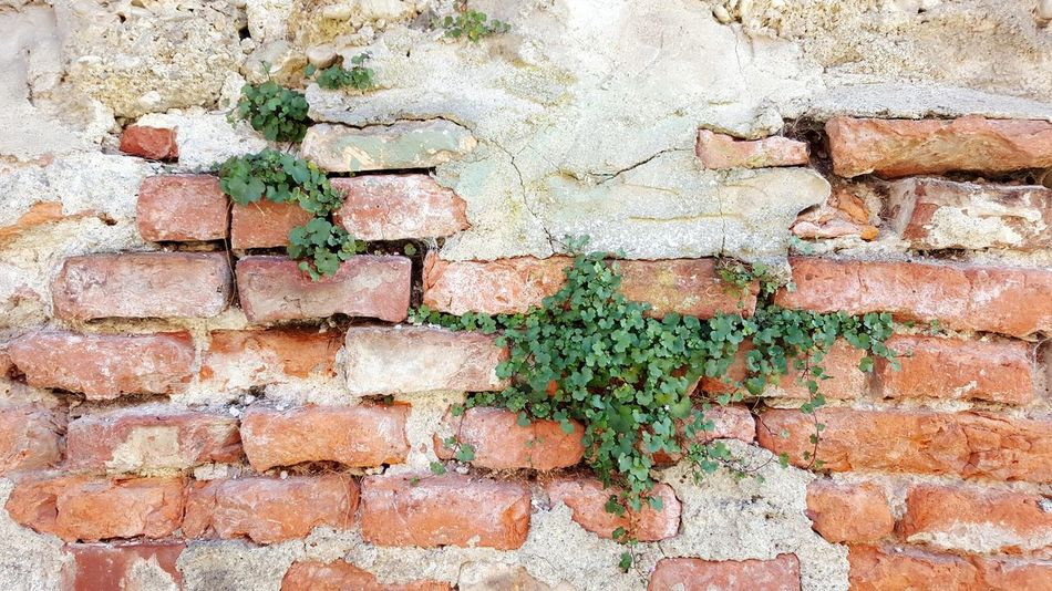 Wall - Building Feature Day Textured  Architecture Rough Outdoors Brick Wall Pattern Close-up Multi Colored No People Plant On The Wall Old Wall Texture Old Wall