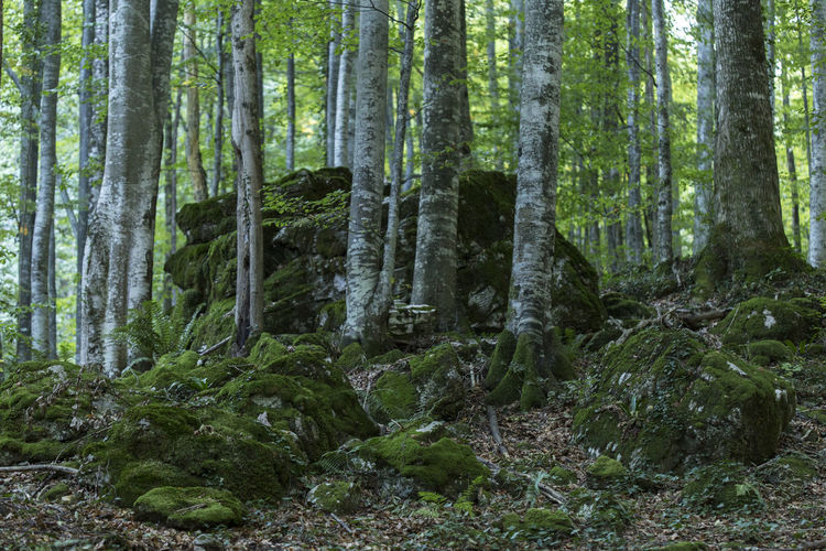 Green Green Green!  Perspectives On Nature Beauty In Nature Day Forest Growth Moss Mossy Rock Nature No People Outdoors Pine Tree Plant Scenics Tranquil Scene Tranquility Transylvania💕 Tree Tree Trunk WoodLand