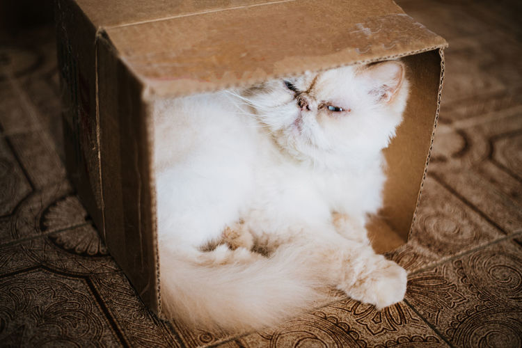 Portrait of cat relaxing in cardboard box on floor