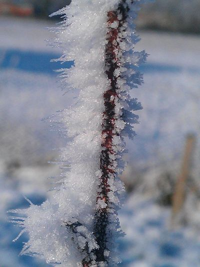 Beauty In Nature Close-up Day Detail Focus On Foreground Frost Frozen Ice Natural Pattern Nature No People Outdoors Season  Selective Focus Tranquility Twig Water Weather