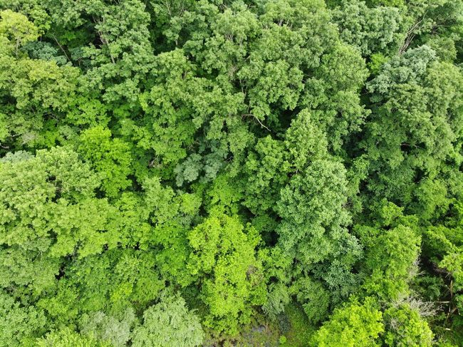 Aerial View Aerial Shot Aeriel Photo Dronephotography Tree Tops Nature Photography Nature Textures and Surfaces Texture Treelines Trees Forest Photography Textured  Forest Backgrounds Full Frame Green Grass Green Color Woods Peaceful Energy Power Positive Healthy Sunshine Leaves Botanical Scene Future
