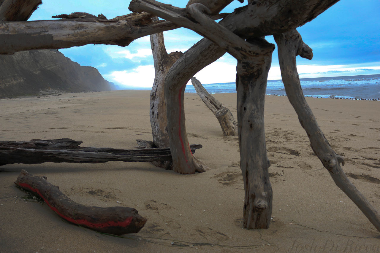 sand, beach, shore, sky, nature, scenics, beauty in nature, day, outdoors, tranquil scene, tranquility, sea, water, tree trunk, no people, tree, landscape, horizon over water, dead tree