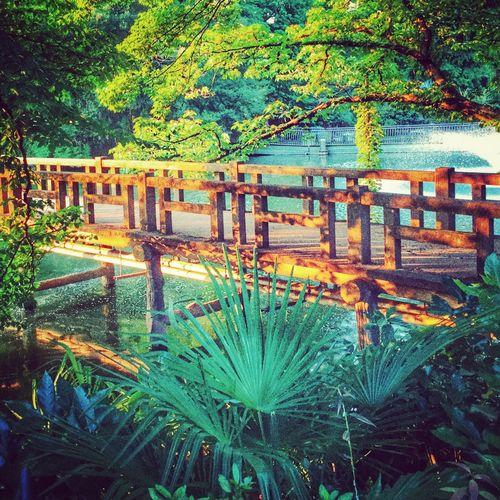 Respite from a long hot day Japan Inokashira Footbridge Color Of Life