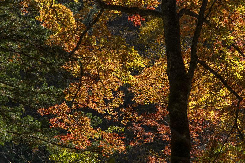 Sun shining through trees during autumn