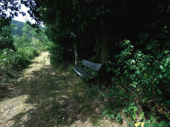 Bench in the