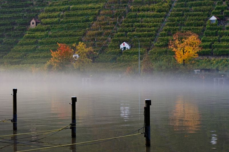 Fog Over Lake By Agricultural Field