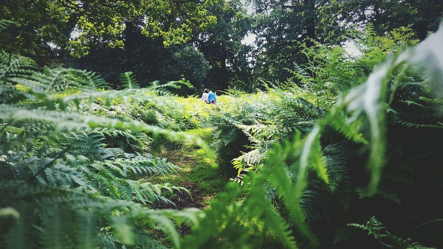 This Is Summer day 5. Walking Walking Together Ferns Pathway Exploring Nature Summer Fun