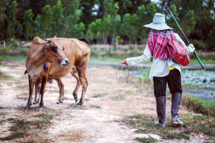 Woman standing with cow