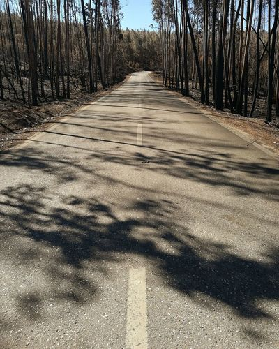Road Forest Afterfire Fire Ashes