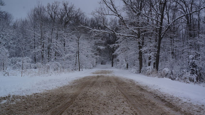 Snowy winter road Bare Tree Beauty In Nature Cold Temperature Day Diminishing Perspective Landscape Nature No People Outdoors Road Scenics Sky Snow The Way Forward Tranquil Scene Tranquility Tree Weather Winter Shades Of Winter