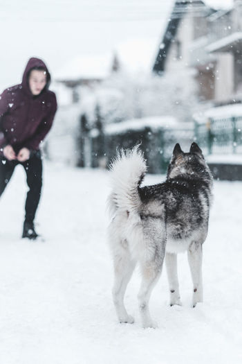 Husky Snow Winter Cold Temperature Mammal Pets Domestic Animals Domestic Animal Animal Themes Warm Clothing Full Length Canine Dog Vertebrate One Animal Field Clothing Nature Standing Snowing Extreme Weather Outdoors