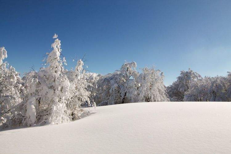 Pristine snow on my hills Pristine Snow Top Snow Cold Temperature Nature Tranquility Winter Tranquil Scene Landscape No People Day Beauty In Nature Scenics Outdoors Clear Sky Tree Sky