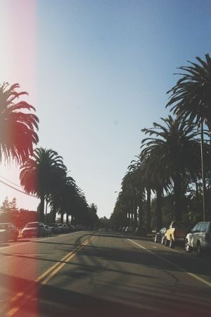 🌴 Street Palms Summer Beach Nature Love Happy People Hot Starting A Trip