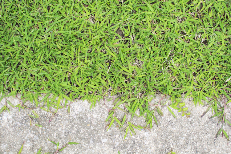 Top view of green grass and concrete on the ground in the garden Abstract Background Bush Closeup Detail Ecology Fresh Garden Grass Green Ground Growth Land Leaf Natural Nature Organic Outdoor Park Pattern Plant Texture Green Color No People Day Field Beauty In Nature Freshness Outdoors Plant Part Fragility
