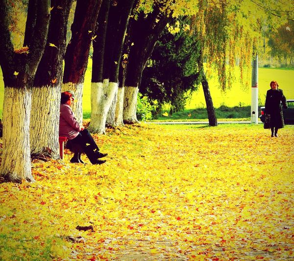 Mazyr RePicture Travel Our Best Pics Relaxing Autumn Colors Of Autumn Golden Autumn Eyeem Don't Like My Photos EyeEm Best Edits From The Rooftop