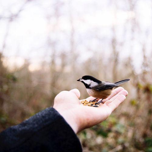 Close-up of human hand feeding bird