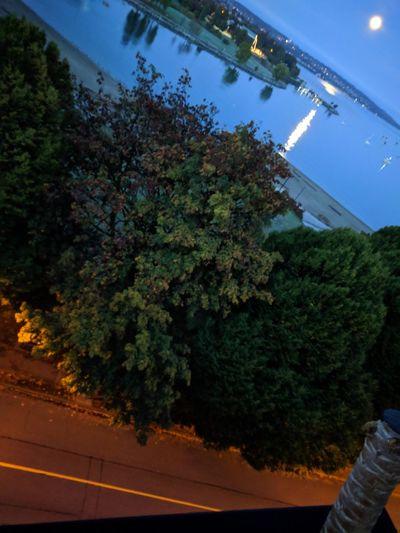 Tree UnderSea