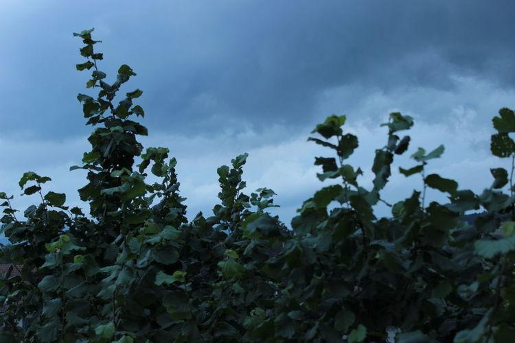 Cloud - Sky Day