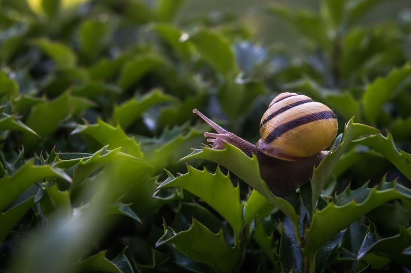 Close-up side view of snail on leaves
