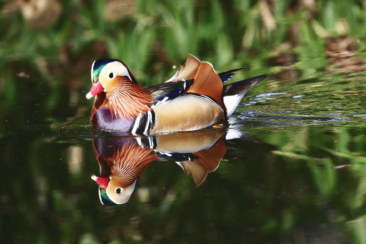 View of a bird in water