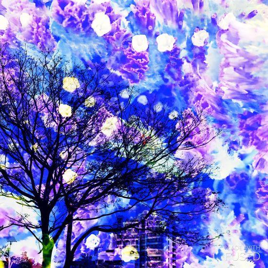 紫爆 Tree Nature Growth No People Low Angle View Blossom Flower Outdoors Branch Plant Sky Bare Tree Day Beauty In Nature Tree City Nature Synthesis White Building Silhouette