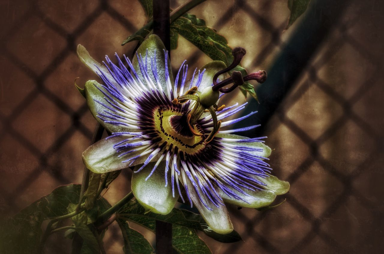flower, petal, flower head, fragility, growth, beauty in nature, nature, passion flower, freshness, day, plant, blooming, purple, high angle view, outdoors, no people, pollen, close-up