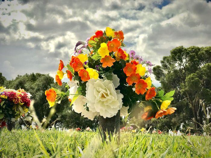 Flowers Beauty In Nature Land Flower #garden #white #photography #beautifulnature Flower#garden#nature#ecuador#santodomingoecuador#eyeEmfollowers#iphoneonly#nofiltrer#macro_garden#pretty#beautiful#followme#sho Graveyard #graveyart #jakarta #museum #eLNemo #gravestone #angel #statue