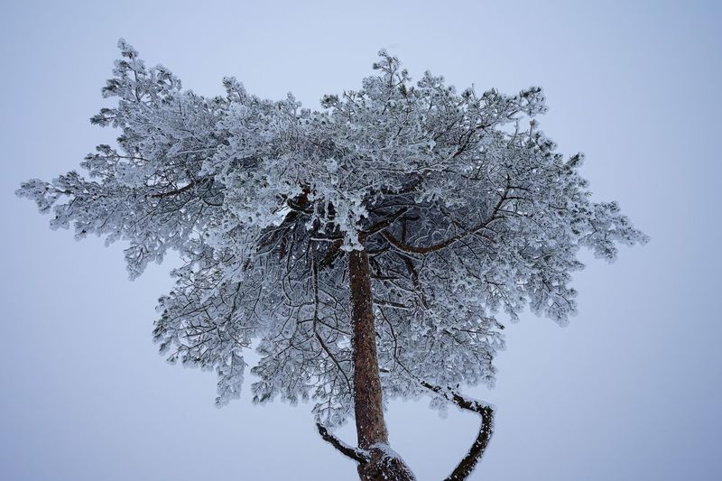 Tree at Snow