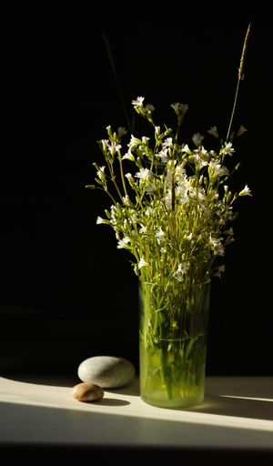Still life. Flowers. Animal No People One Animal Plant Animal Themes Indoors  Nature Vase Close-up Black Background Studio Shot Glass - Material Mammal Animal Wildlife Transparent Green Color Freshness Container Flower Glass White Flower Rock