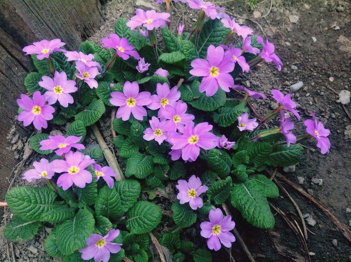 Весение цветы цветы🌸🌼🌻💐🌾🌿 цветы весна любимые любимые цветы I Love It ❤ Love It Love EyeEm Nature Lover