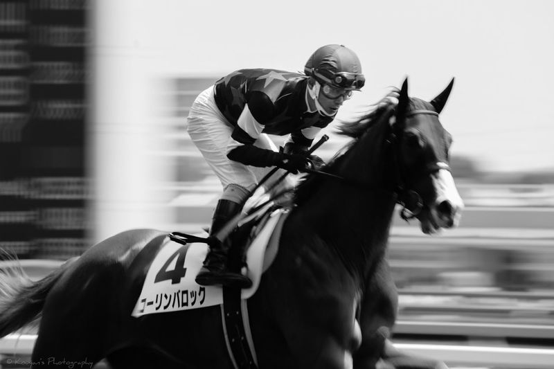 Racecourse EyeEm Best Shots EyeEm Black & White Black And White Blackandwhite Tokyo Racecource Panning Shoot Horse Horses