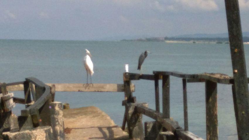 Protecting Where We Play Tropical Beauty Oceanside Treasures Hunny Bay Resorts