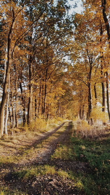 Nature_perfection Mecklenburgvorpommern Nature Lovers Germany Trees Tree_captures Natureshots Vscocam Nature