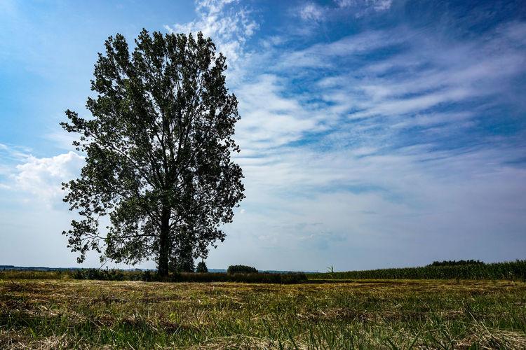 A tree. Idyllic