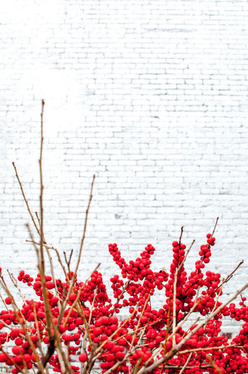 Brick Wall Flowers Highline Nikon NYC Plant Red Red And White Winter