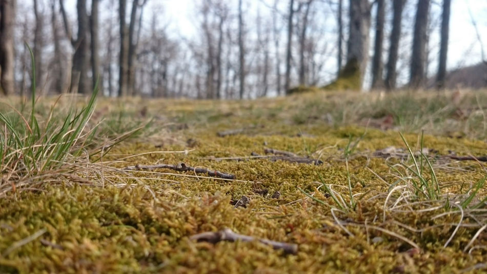 Nature Grass Tranquility No People Outdoors Day Beauty In Nature Forest Tree Moss Hungary Bükk EyeEm Nature Lover