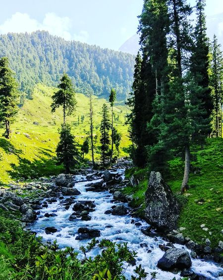If this Love only Exists in my Dreams, Then Dont Wake Me Up. Nature Day Growth Beauty In Nature Green Color Water No People Outdoors Tree Mountain Scenics Sky Freshness Blooming Fragility Aruvalley Pahalgham Trekking TrekkingDay Icy Day Coldwater