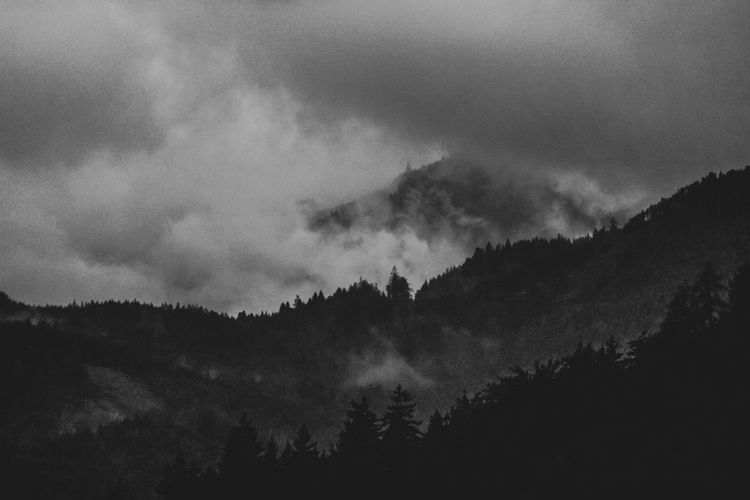 Beauty In Nature Bw Cloud - Sky Day Fog Forest Landscape Low Angle View Mountain Nature No People Outdoors Scenics Silhouette Sky Tree
