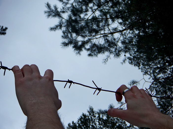Low angle view of hands holding plants against sky