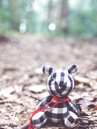 StillLifePhotography Doll Teddy Bear Forest Nature Photography Naturelovers Vacation Travelling Alone EyeEm Nature Lover EyeEm Selects Softness Soft Light Vintage Fade Focus On Background Background For Quotes Pretty Beautiful Day Daydreaming
