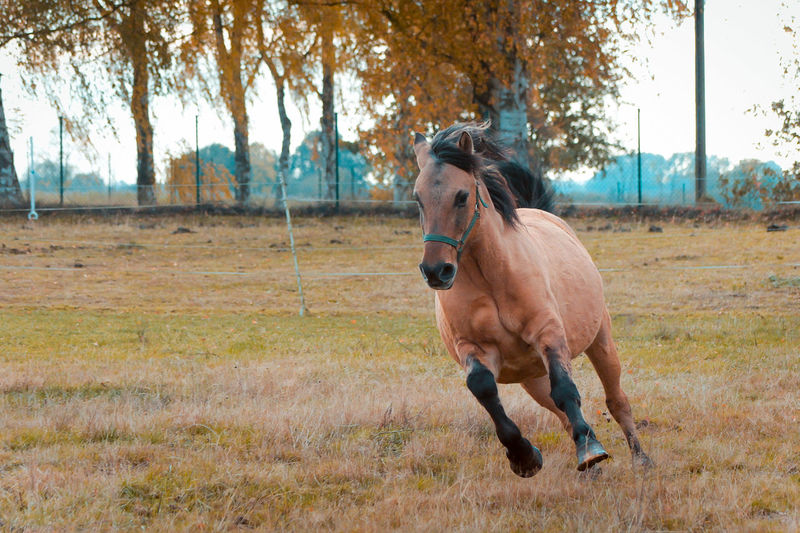 Animal Themes Beauty In Nature Brown Day Domestic Animals Field Grass Horse Horse Photography  Horses Livestock Mammal Mane Nature No People One Animal Outdoors Tree